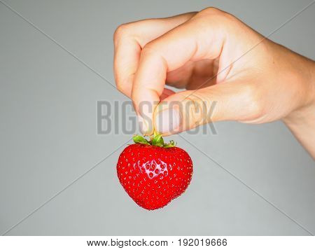 Female Person Holding A Fresh Red Strawberry Isolated Towards Gray Colored Backgdrop