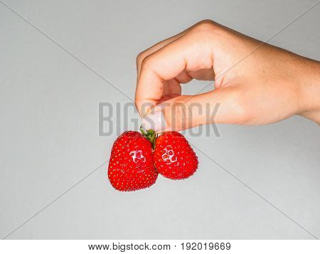 Female Person Holding A Fresh Red Strawberries Isolated Towards Gray Colored Backgdrop