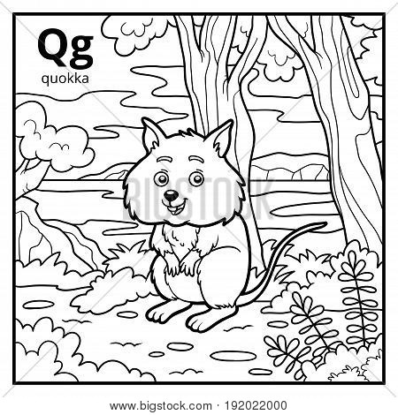 Coloring book for children colorless alphabet. Letter Q quokka poster