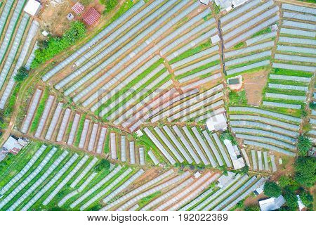 aerial photography beautiful view of vegetable plots with clear plastic in the mountain for agriculture concept.