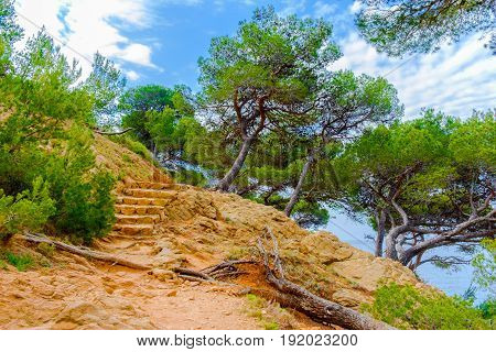 Close up of a path on the Estaque mountain range by