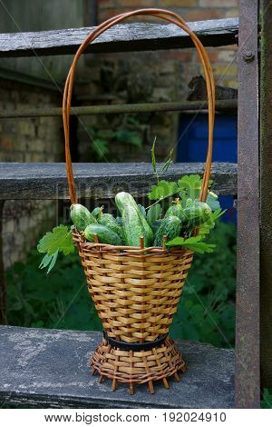 Fresh cucumbers in a brown wicker basket on a wooden staircase