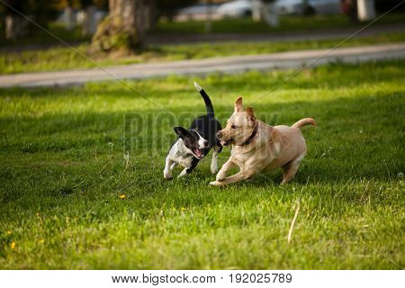 Two dogs walking on green grass in the park