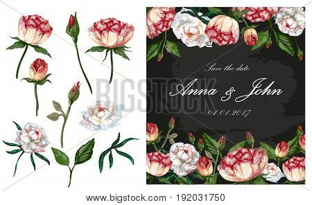 Vector illustration of wedding invitation, greeting card with peony flowers. Set of isolated basic parts of peony plant bud, flower, stem and leaf.