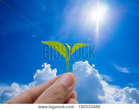 Growing a plant. Hands holding and nurturing tree growing on fertile soil / nurturing baby plant / protect nature / Agriculture on blue sky background