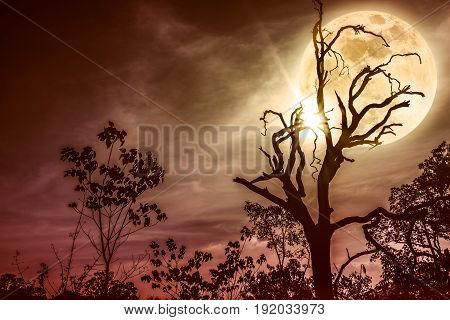 Night landscape of sky and super moon with bright moonlight behind silhouette of dead tree serenity nature. Outdoors at nighttime. Sepia tone. The moon taken with my own camera.