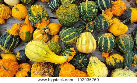 variety of colorful autumn gourds at the market