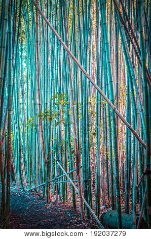 Beautiful bamboo growing Japanese forest vertical image
