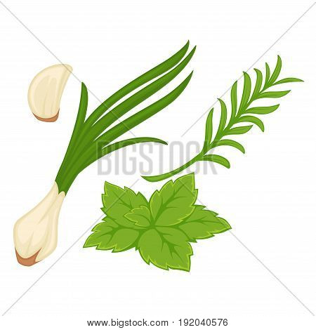 Spring greenery collection consisting of green onion, garlic piece, mink leaf and tarragon bunch isolated on white. Close up realistic vector poster in flat design of healthy garden products