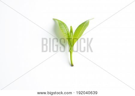 Isolated green leaf shoot on white background
