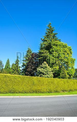 High green hedge and trees along asphalt road on blue sky background