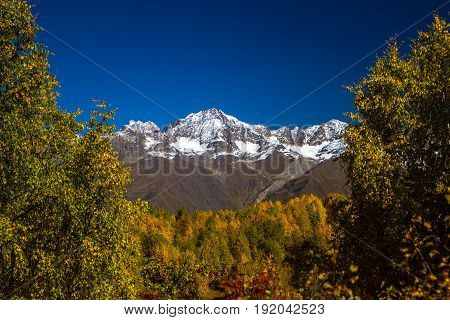 Humped peak of Mount Ushba Georgia. Down in the early autumn warmth and trees in the autumn crimson foliage. The peak and the mountain chain are in the snow.
