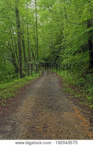 Wilderness Trail in a Rainy Forest in the Great Smoky Mountains in North Carolina
