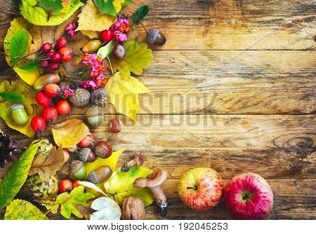 Autumn background with crop of mushrooms berries apples leaves acorn nut on wooden table