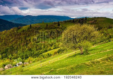 Tree And Fence On Rural Meadow In Mountains