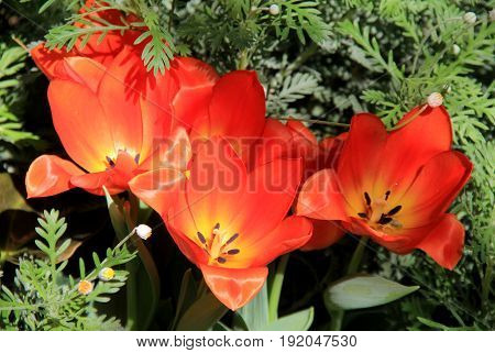 Pretty orange flowers tucked into lush green leaves of plants in garden