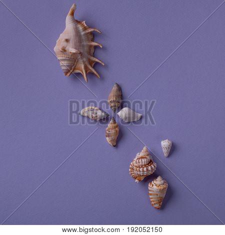 Different Seashells On Purple