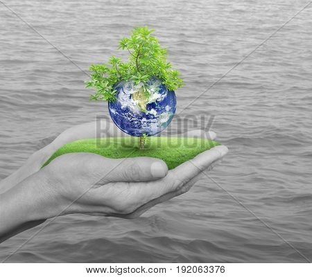 Planet and tree in human hands over black and white sea background Save the earth concept Elements of this image furnished by NASA