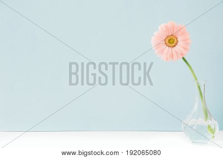 pink flowers in a vase on a table on a blue background. space for text