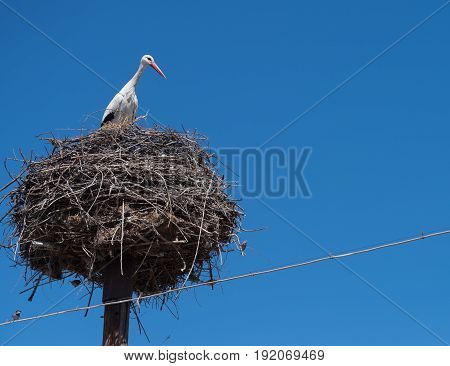 A stork in a nest on top of an electric pole in Southern Armenia