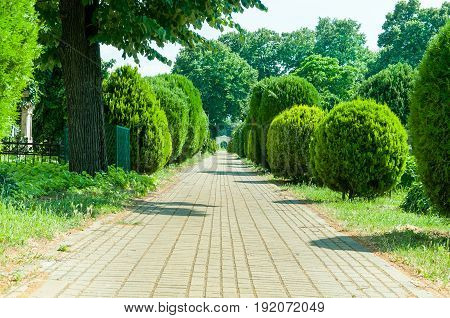 Brick path in cemetery with green bushes, trees and gate in the distance. Cemetery yellow brick road.