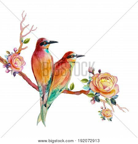 Watercolor painting realistic illustration colorful of bird lovely and rose on white background