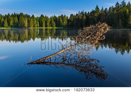 Fallen Tree, Forest And Blue Sky Reflected On Water Surface Of Lake Etang De La Gruere