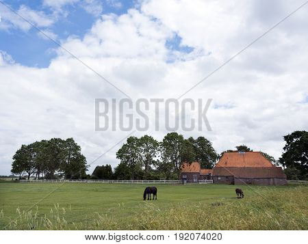 horses in meadow before old typical friesian farm in south east of dutch province friesland