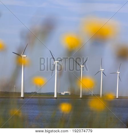 white wind turbines against blue sky off the coast of flevoland in the netherlands on sunny day seen through yellow flowers