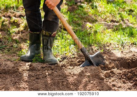 Spring Work In Garden. Leg Of Male Farmer In Rubber Boots With Shovel And Potato In Ground In Spring garden.
