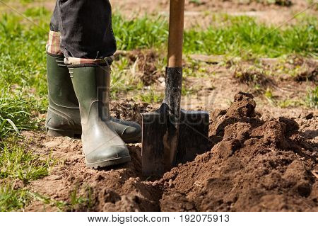 Spring Work. Male Farmer In Rubber Boots With Shovel In Ground In Spring Sunny Garden Close Up.