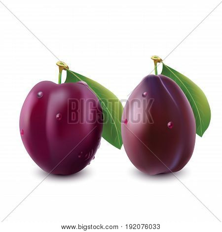 Two ripe plums with green leaves. Photo-realistic vector illustration of plum fruit
