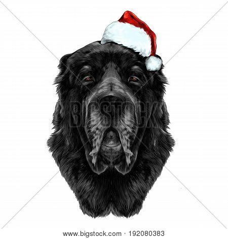 the dog's head black wool breed Alabai or the Central Asian shepherd dog in Santa hat full face symmetry sketch vector graphics color picture