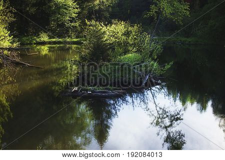 Trees illuminated by the sun on a small island in a pond