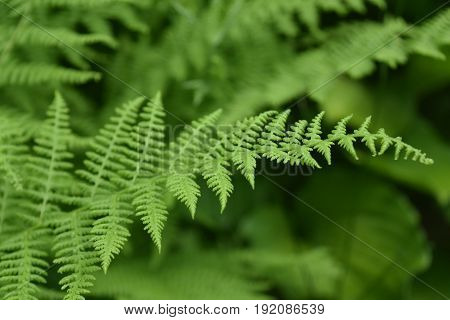 Wild shade garden with a green fern frond.