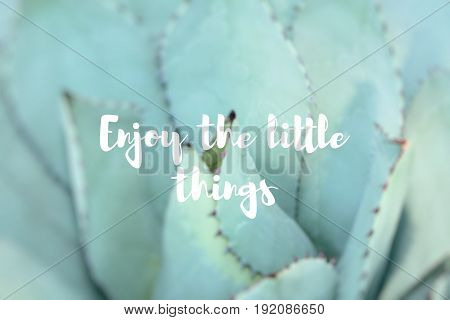Enjoy The Little Things. Sharp Pointed Agave Plant Leaves.
