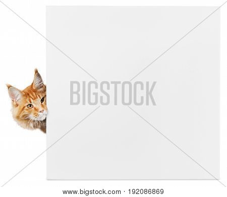 Red cat adorable empty card color white background