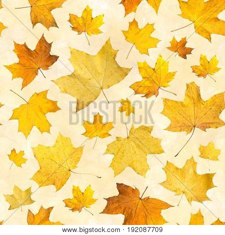Seamless pattern with dry autumn leaves. Background of maple orange pressed leaves