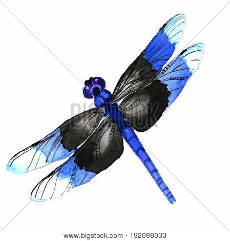 Insect dragonfly  in a watercolor style isolated. Aquarelle dragonfly for background, texture, wrapper pattern, frame or border.