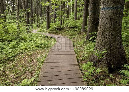 Ecological trail made of wooden planks to walk in a summer forest in the background a little bridge over a stream.