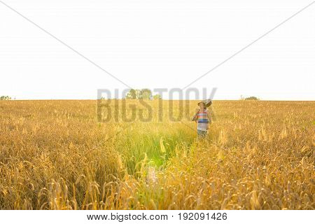 Musician holding acoustic guitar and walking in summer fields at sunset