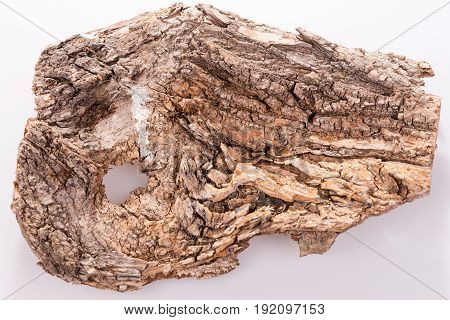 Piece of bark of old tree isolated on white background