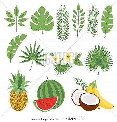 Set of cute tropical leaves and fruits palm leaves and flowers. Pineapple watermelon bananas coconut. Collection of scrapbooking elements for beach party. Objects for decoration design on advertising booklets banners flayers