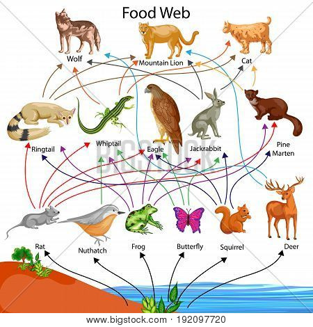 Education Chart of Biology for Food Web Diagram. Vector illustration