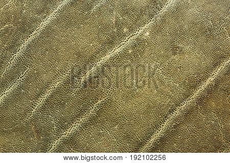detailed image of african elephant leather texture for your design showing real animal pelt