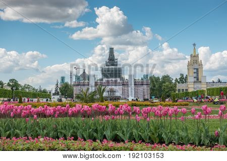 .MOSCOW RUSSIA - May 27 2017: Pink tulips on VDNKh VDNKh - Exhibition of Achievements of National Economy.