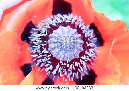 Orange Flower With A Fluffy Purple