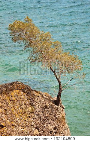 Rocky tree and rock over the sea Rocky tree and rock over the sea