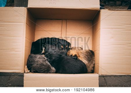Four Small Mixed Breed Puppies Sitting In Cardboard Box. Dogs Huddle Together Warming Together.