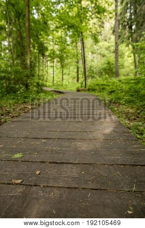 Ecological path from wooden boards for walking in the forest with an unsharp background. Summer day close-up.